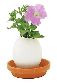 A petunia growing out of an egg?